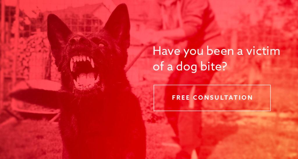 San Antonio dog bite lawyer